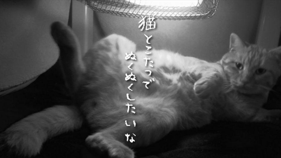 【那須どうぶつ王国】猫と一緒にこたつでぬくぬくしませんか?カピバラ温泉も見逃せません!