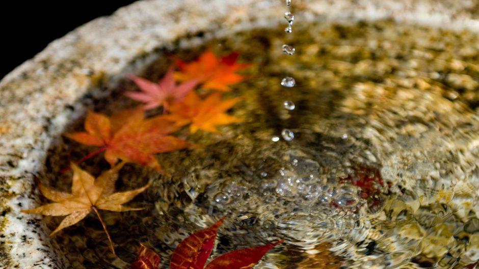八芳園で紅葉特別ライトアップがスタート!秋の食とイベントを満喫しよう!