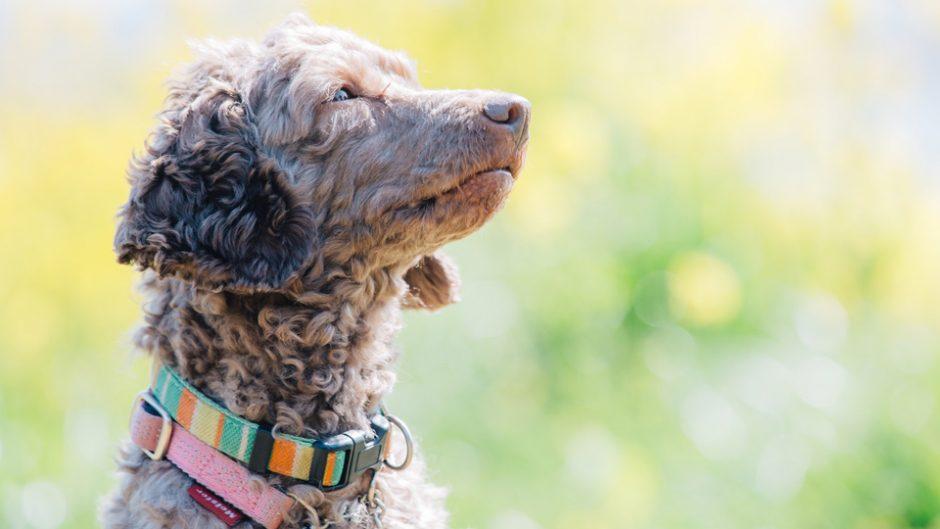愛犬と遊園地で遊べる夢のようなイベント! 浜名湖パルパルの『わんちゃんと一緒に楽しむ遊園地』