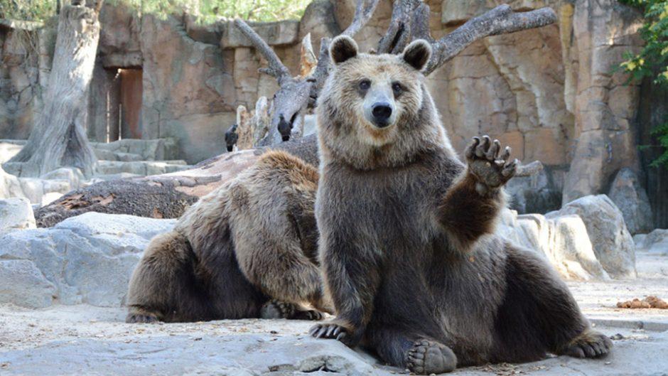 「くまのパディントン™展」世界中で愛され続ける紳士なクマが今年で生誕60周年!