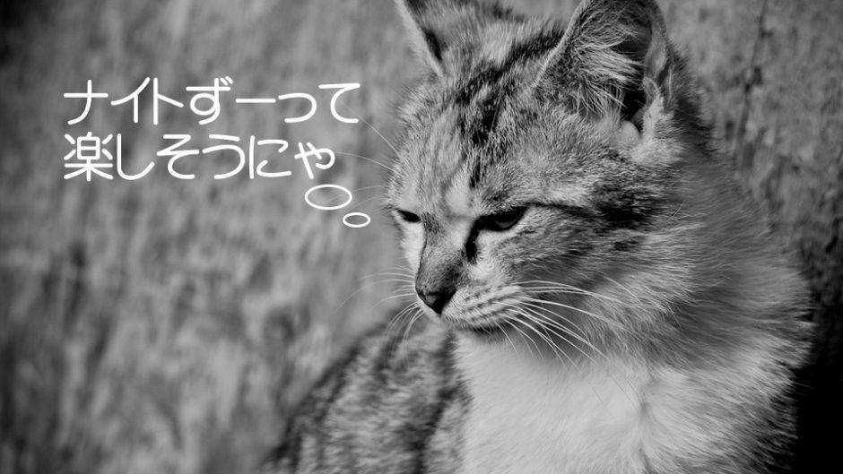 豊橋総合動植物公園(のんほいパーク)でナイトZOOが開催!夜の特別な時間を楽しもう
