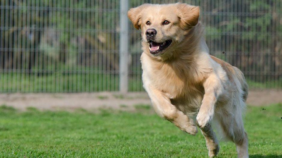 犬好きの祭典!第10回イヌリンピックトライアルが開催!!