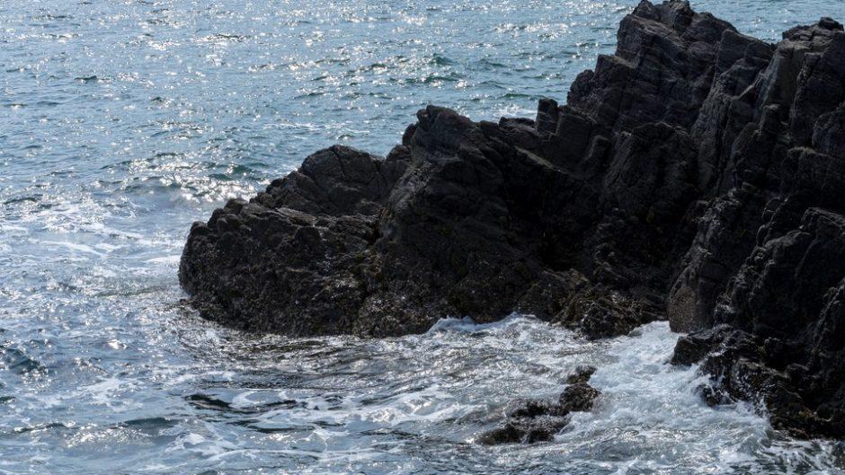 静岡に超危険な でもカワイイ!?海の危険生物展が上陸!!