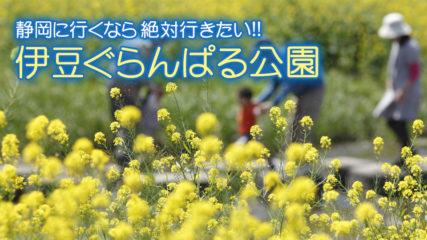 伊豆ぐらんぱる公園とは? わんちゃん(犬)ともアトラクションで思いっきり遊べるテーマパーク!!