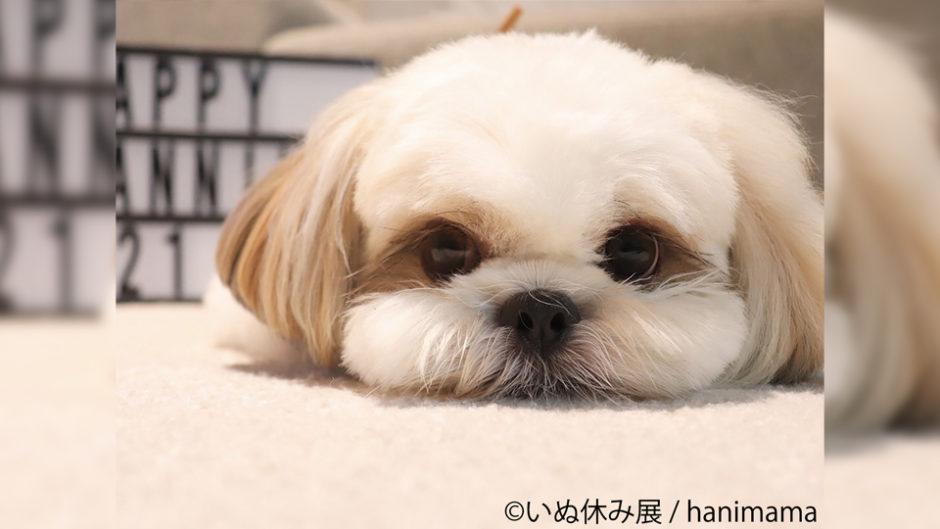 あの有名犬たちの写真大公開!『いぬ休み展』が名古屋で開催