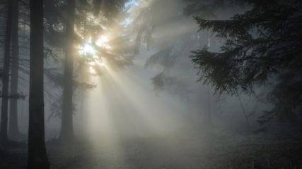 木曽三川公園 カルチャービレッジで龍神(遊具)、そして霧の結界に挑戦しよう!?
