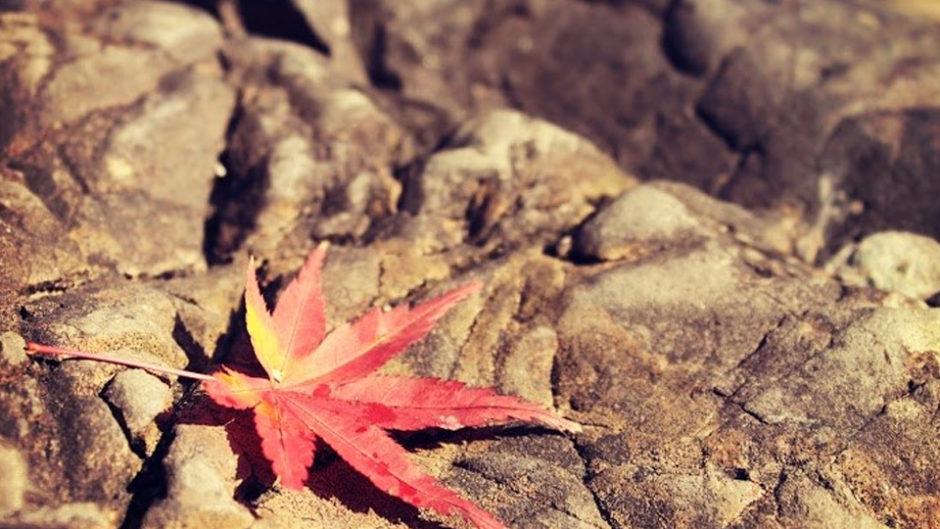 紅葉のライトアップが美しい!三重県の聖宝寺にて『平成三十年 もみじ祭り』が開催