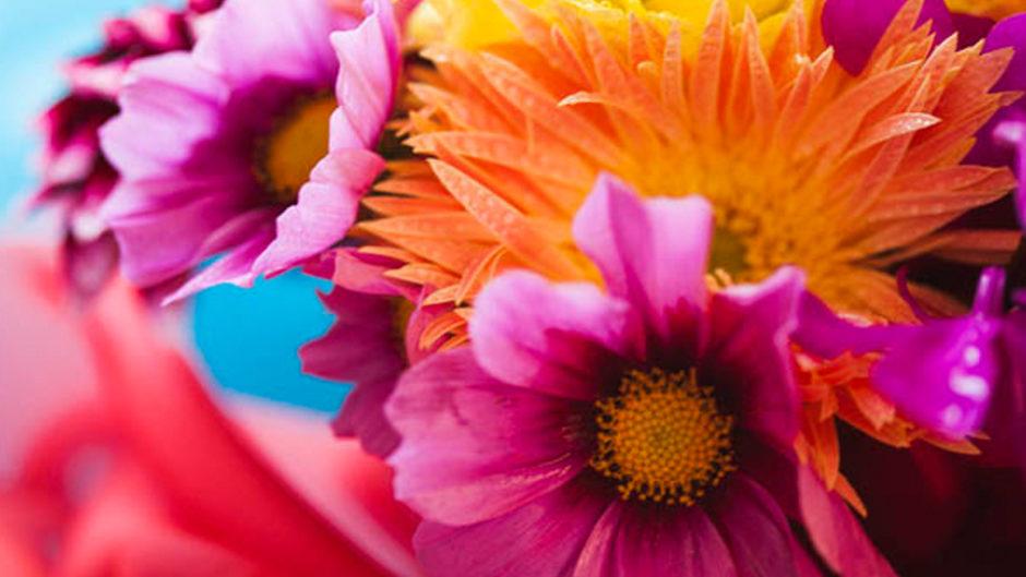 ヘルタースケルターやAKB48のPVでお馴染み「蜷川実花」の巡回展が東海エリアで開催!「蜷川実花展 -虚構と現実の間に-」
