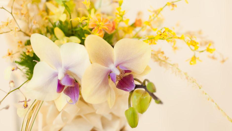 東海フラワーショウ2019 東海市で年に1度の花と緑の祭典が開催です!