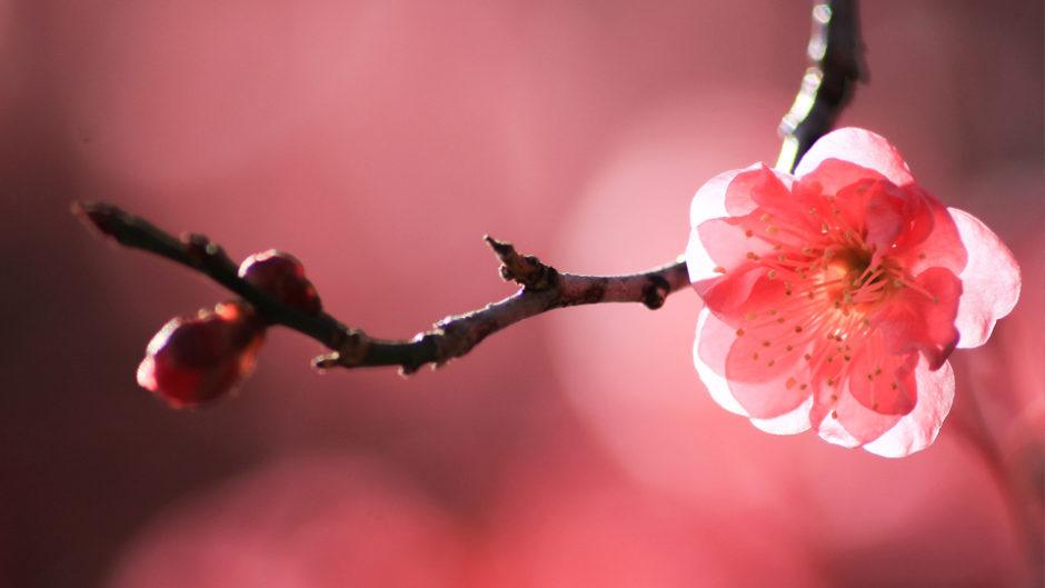 花も甘酒も芸能も!「第75回 熱海梅園梅まつり」で満たされよう♪