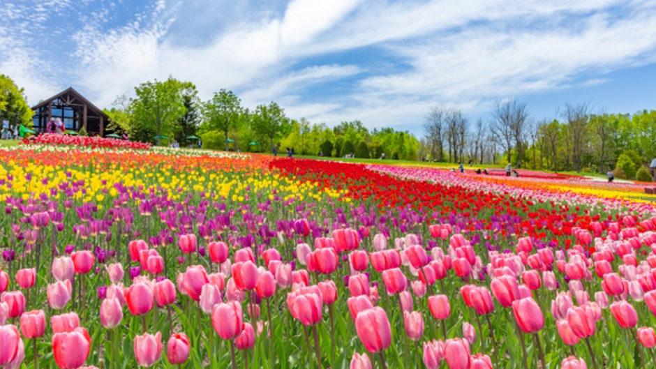 ラグーナテンボスで『チューリップまつり』が開催!春を楽しもう♡