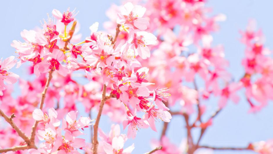 富士山×桜×音楽×ワーク×マルシェ この春一番気持ちが高ぶる!『susonoさくらマルシェ×ミュージックワークス』