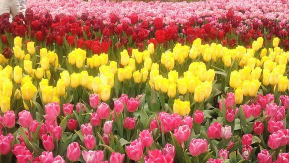 木曽三川公園の春こいフェスで、一足早い春を感じよう♪