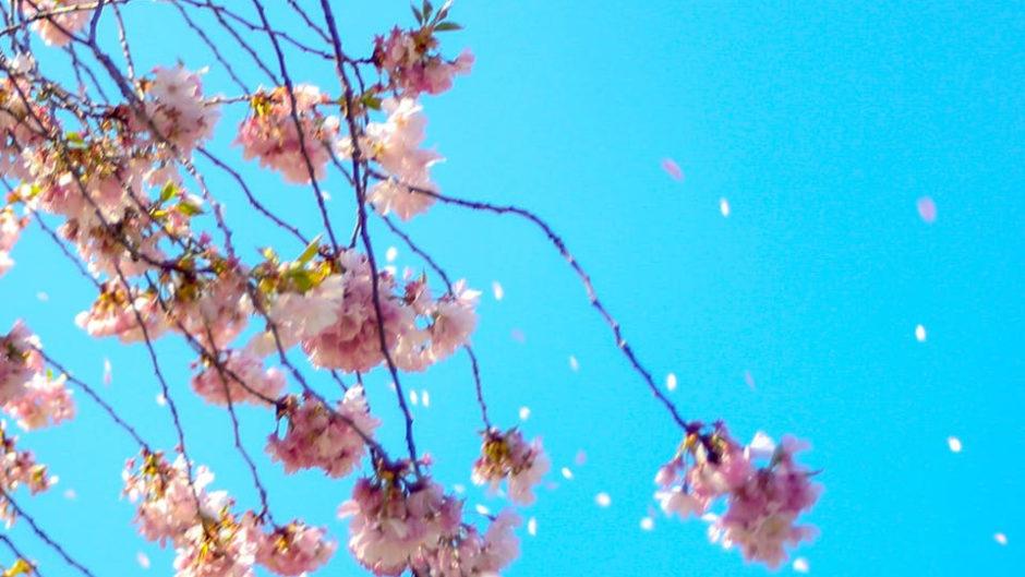 梅×雪とグルメの楽しい遊び場『エコパ春雪祭』!!