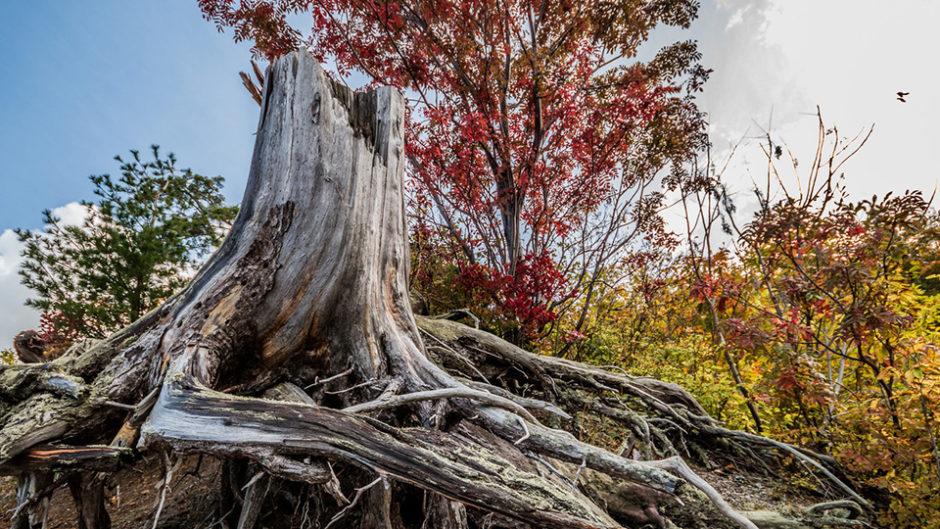 誰もが憧れた秘密基地☆ツリーハウスを手作りしてみませんか?  『森の探検隊「木の上に秘密基地をつくろう!」 』