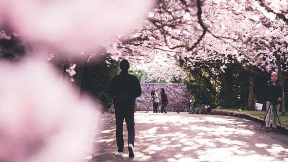 春の犬山城下町を華やかに彩る伝統の犬山祭! 4月6日(土)・4月7日(日)開催!!