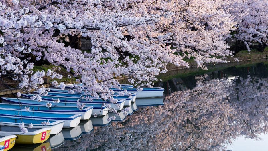一足早い春の訪れを感じてみて!「花咲く伊豆の国フェアin韮山反射炉2019」