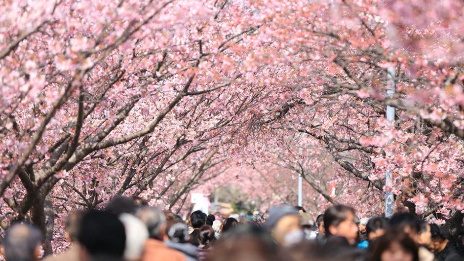 美濃市小倉公園で春の音楽祭 さくらロックフェス2019 アマチュアバンドによる演奏を堪能!!