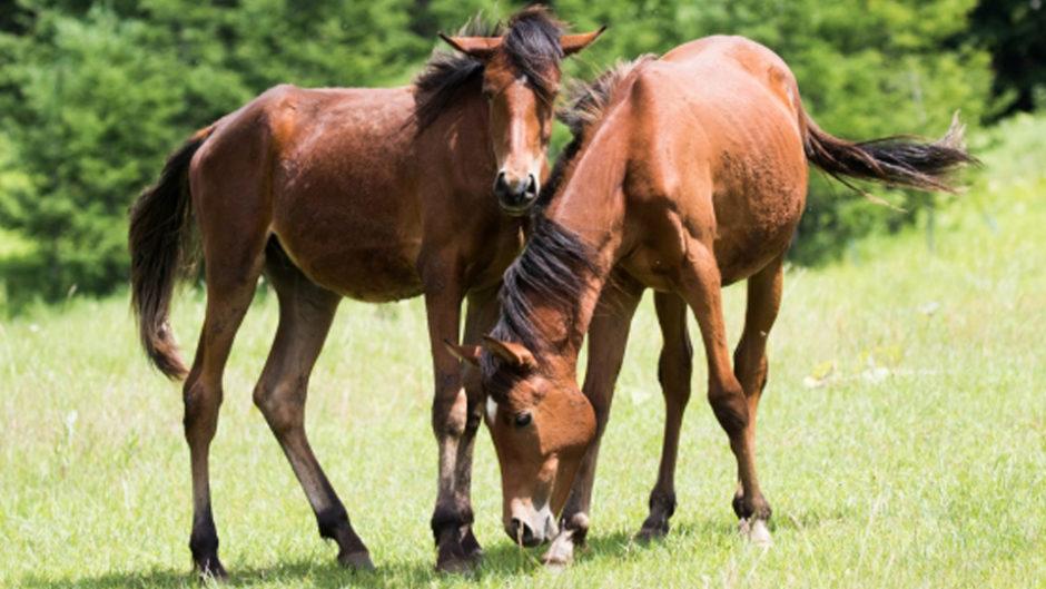 珍しい「馬フェス」を愛知牧場で開催!もっと馬が好きになる!!