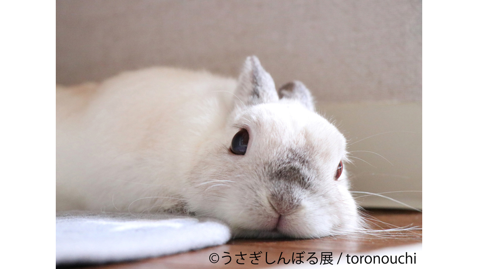 うさぎしんぼる展 in 静岡