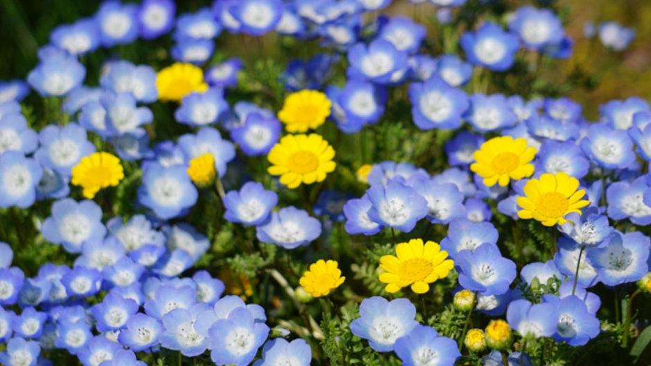 ゴールデンウィーク(GW)の花フェスタは春の花がいっぱい!イベントやマルシェも開催