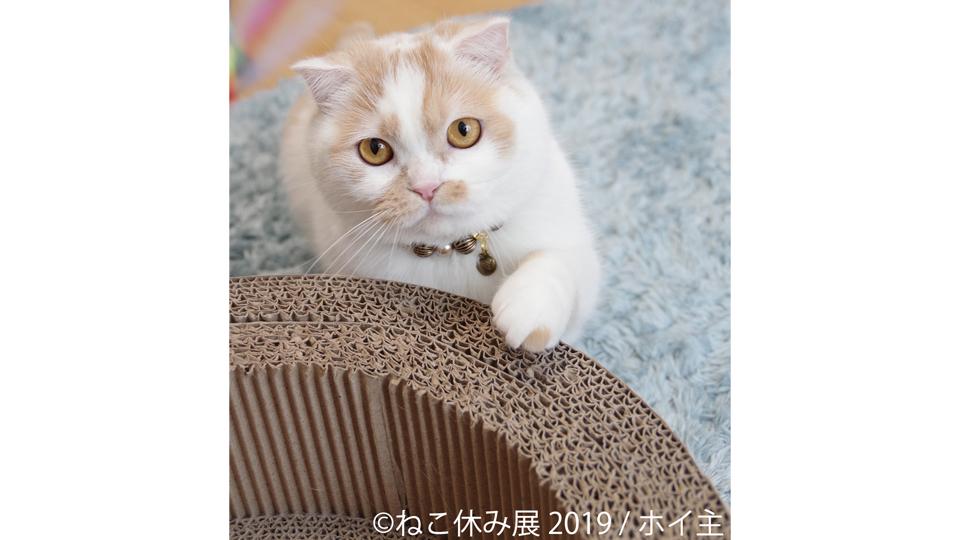 ねこ休み展in静岡
