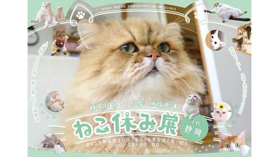 静岡パルコで「ねこ休み展in静岡」開催!かわいい猫に癒される〜♪