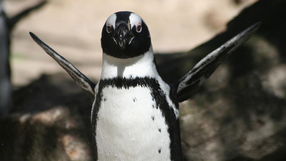 もっとペンギンにタッチ