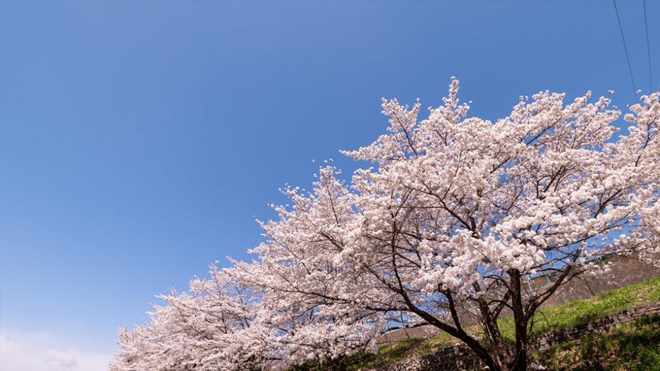 新しいアドベンチャー施設も登場!ぎふ清流里山公園で『里山春まつり』が開催中♡
