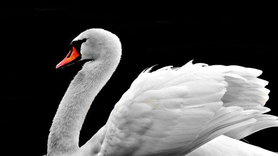 """白鳥庭園で謎解きゲーム『白鳥庭園謎解きの庭~庭師""""寿""""と伝説の作庭記~』が開催"""