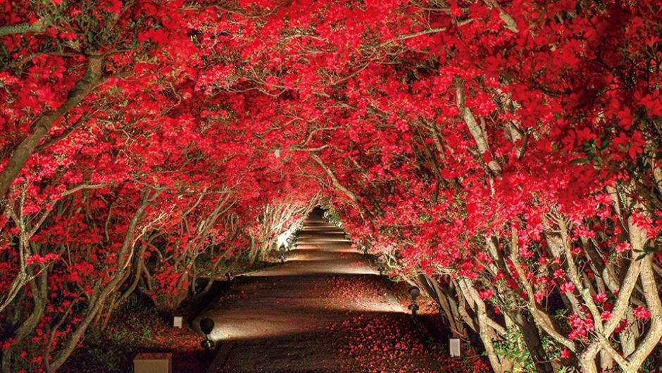 つつじの絨毯&トンネルの美しさは圧巻♪「小室山公園つつじ祭り」開催