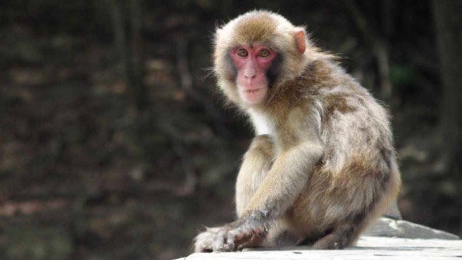 「VS飼育員」日本モンキーセンターが誇る飼育員とガチ対決!