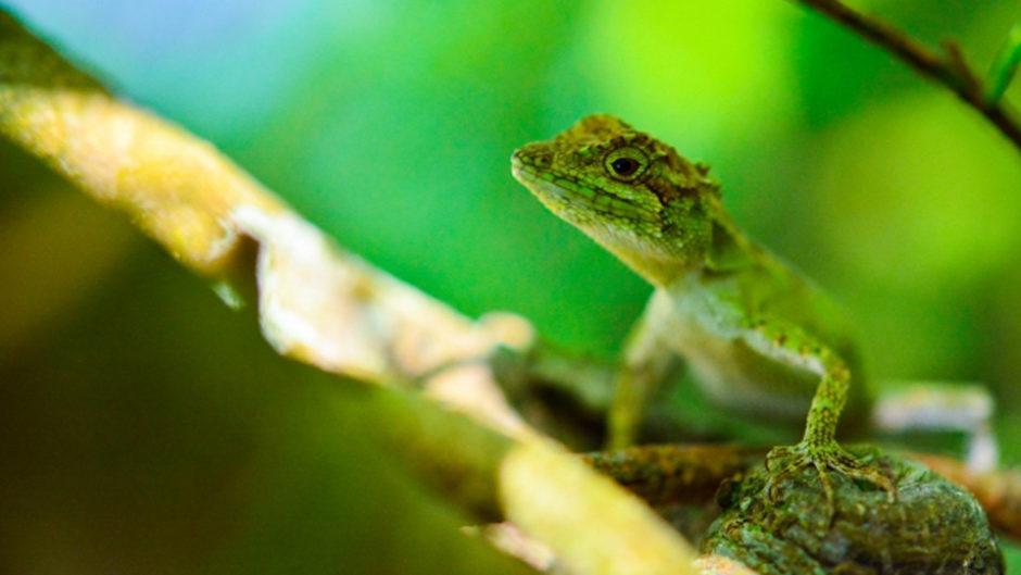 日本最大級の爬虫類展示即売会 「ジャパンレプタイルズショー2019 夏レプ」ツインメッセ静岡にて開催!