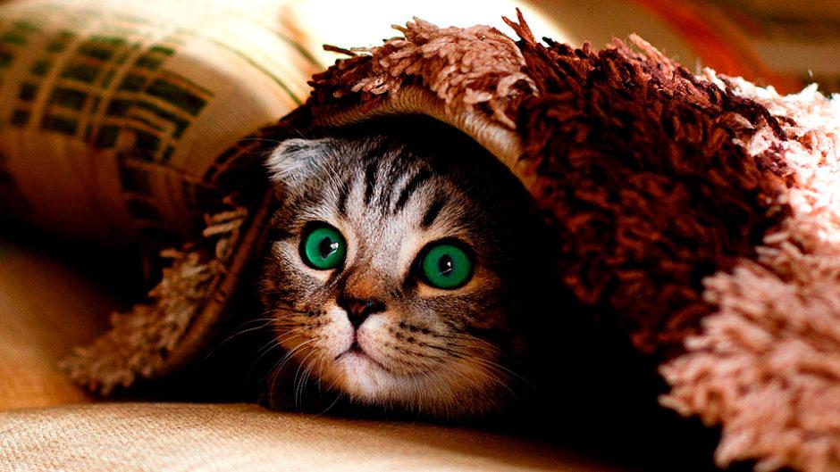 ネコ市ネコ座が2019年8月に吹上ホールで開催!猫好きによる猫のための「猫祭り」