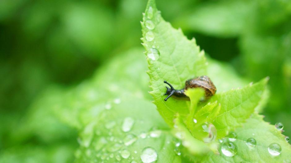 雨の日こそ伊勢へ出かけよう!風情を楽しむ「梅雨のおかげ横丁」