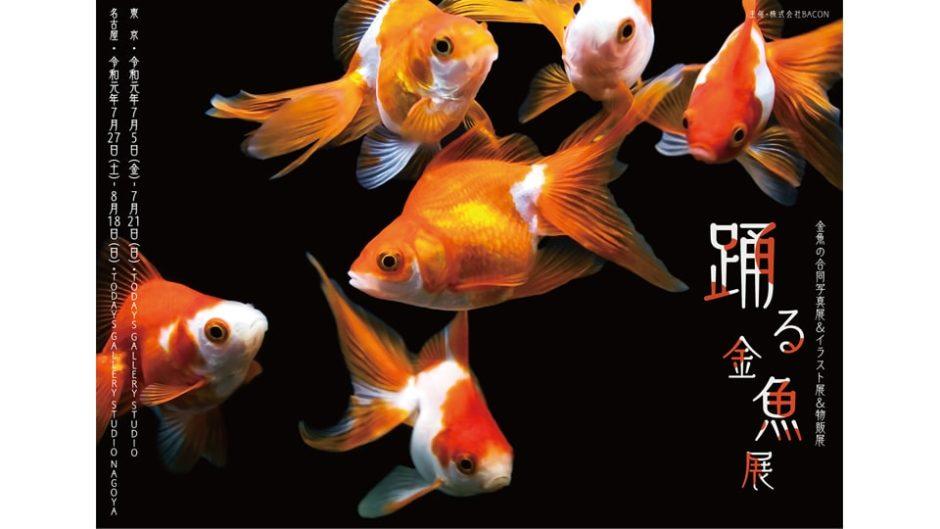 夏にピッタリな「踊る金魚展」は写真・イラスト・グッズがいっぱい!