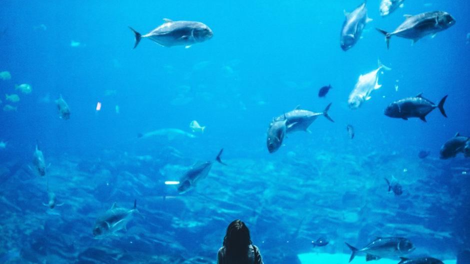 映画「海獣の子供」と名古屋港水族館が今しか見られないコラボ実現!