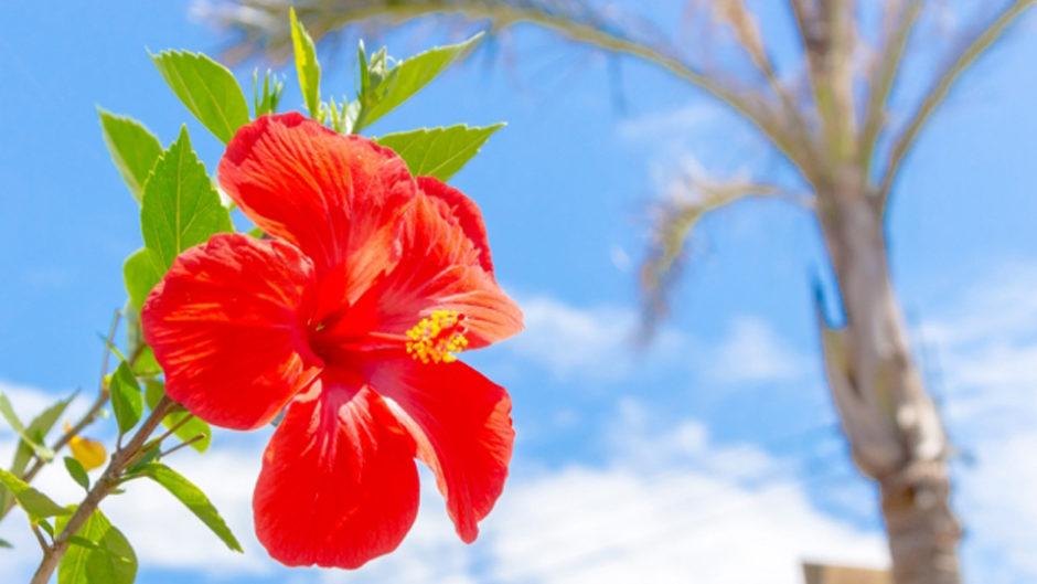 「沖縄南国フェア2019inエスパルスドリームプラザ」開催!この夏はドリプラで沖縄気分♪