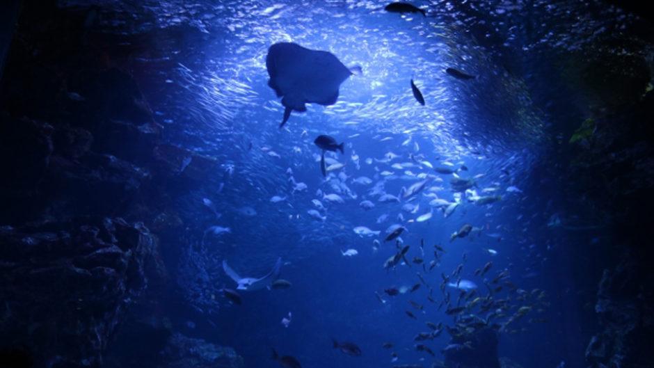 夜の鳥羽水族館は一味違う!入館料もお得な「限定スペシャルナイト」