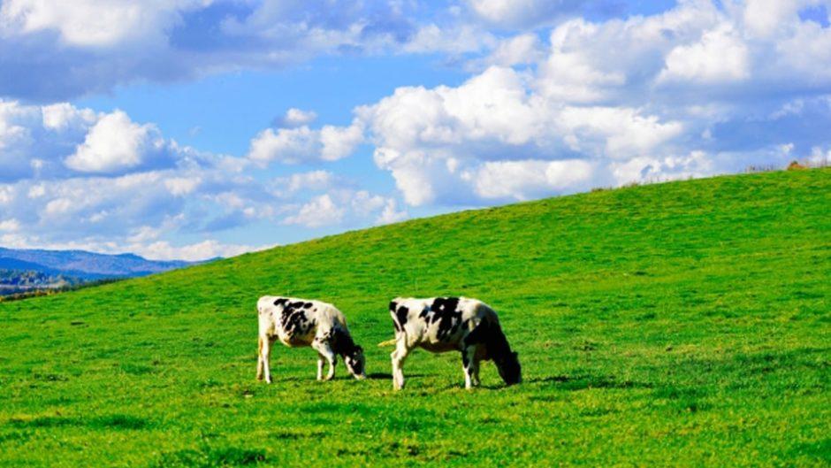 牛さんに触れる!乳牛について知り、触れ、学び、アイスまで作れる3日間☆伊賀の里モクモク手づくりファームが楽しい♪