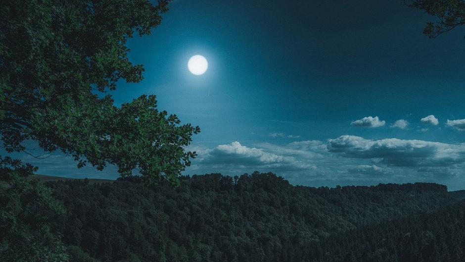 星空に感動!『星降る森の七夕コンサート~星にまつまわるお話と音楽の夕べ~』が開催