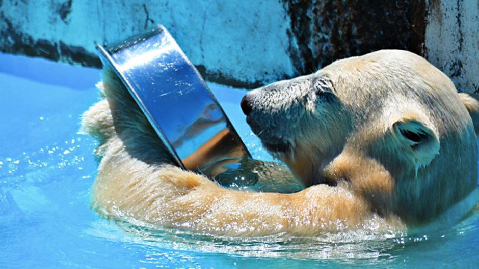 開園50周年の日本平動物園で「夏の動物園まつり2019」開催!「エサやり」や「観察」イベントに参加しよう♡