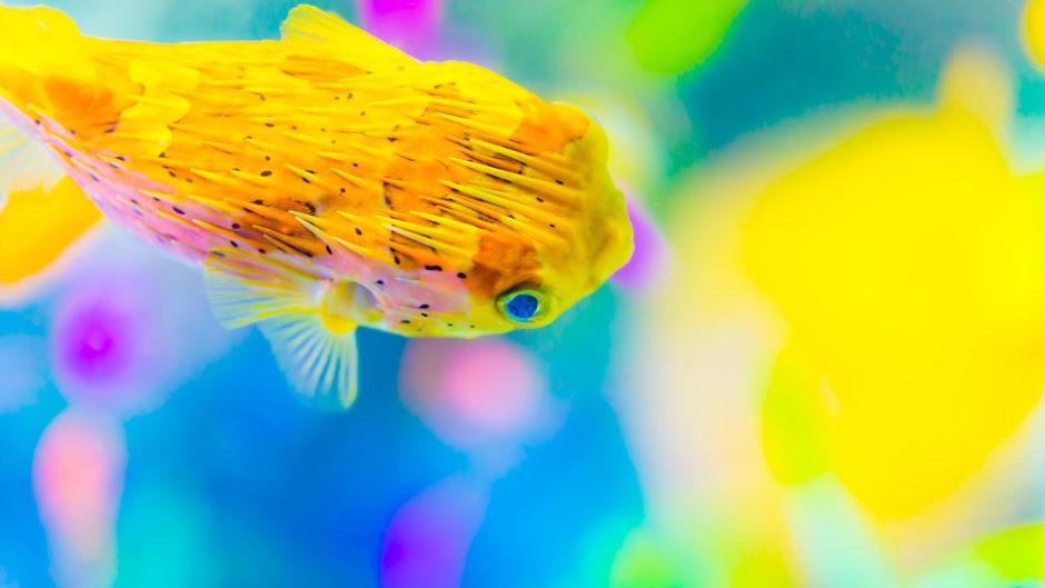 名古屋港水族館で体験スクール「もっと知りたい!ダーウィン教室」が開催!