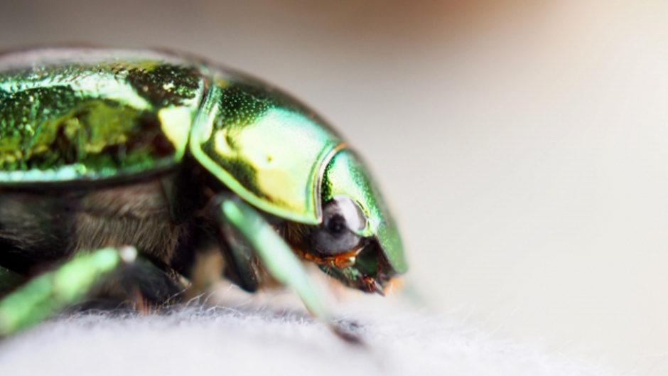 キラキラに輝く昆虫たち!いのちの不思議と美しさを知る「キラキラの昆虫展2019」
