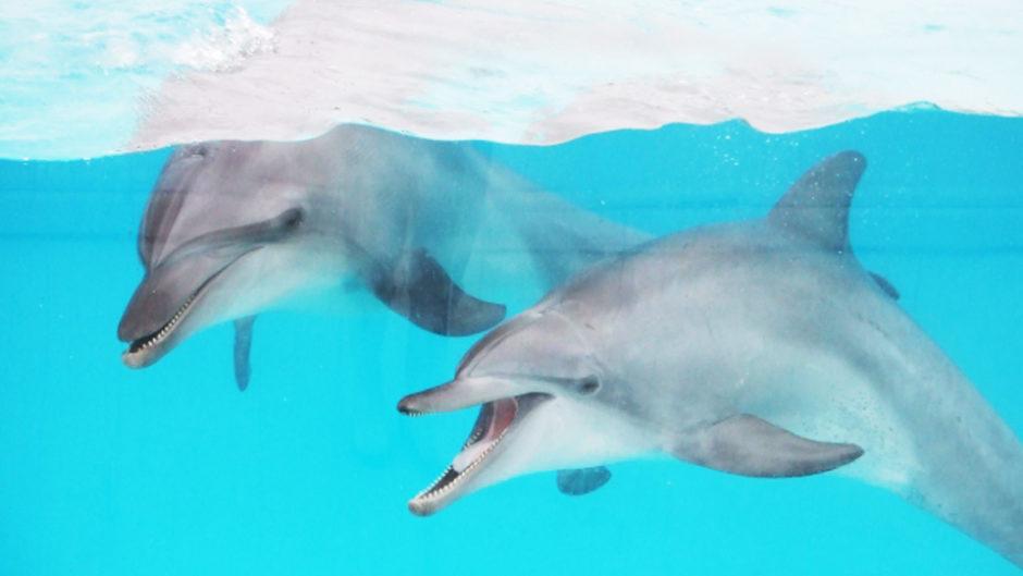 夏季限定☆イルカと一緒にプールに入ってイルカにタッチ!!