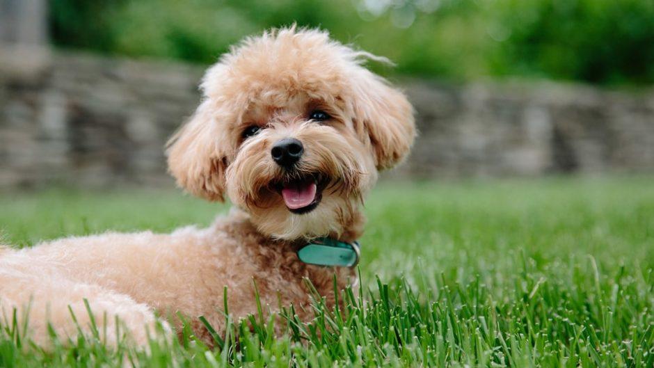 「犬フェスautumn in浜名湖パルパル」10月5日(土)開催!愛するワンちゃんと一緒に楽しい思い出を作ろう!
