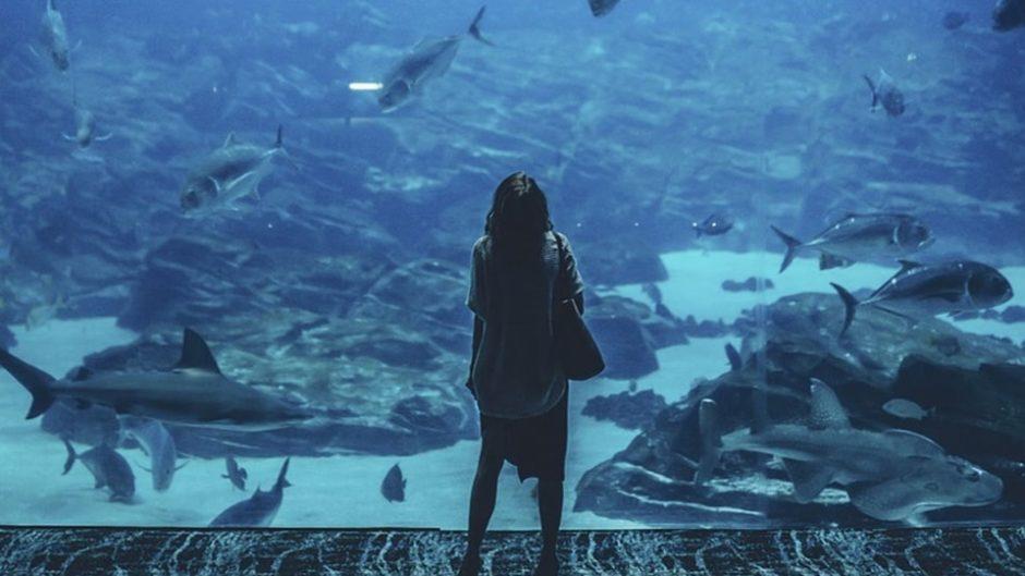 いざ!夜の水族館に潜入☆ 『 アクア・トト ぎふ夜の水族館!』