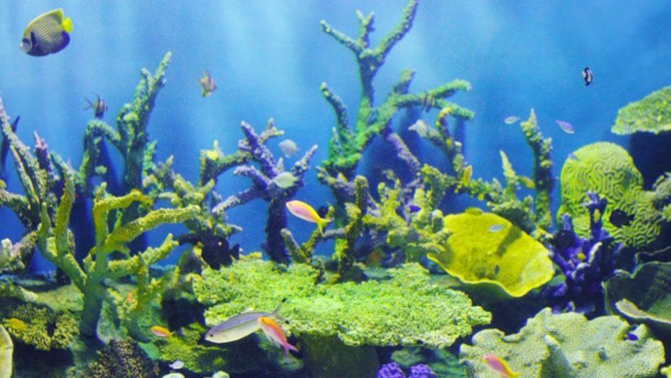 名古屋港水族館の特別展「カラフルコレクション~絢爛華麗な水の生き物たち」こんな生き物見たことある?