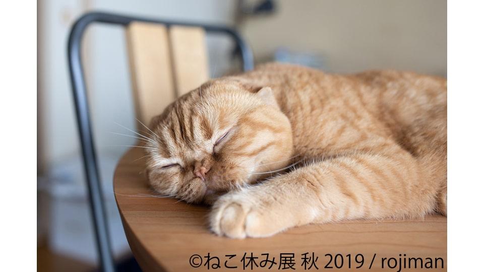 ねこ休み展 秋 2019