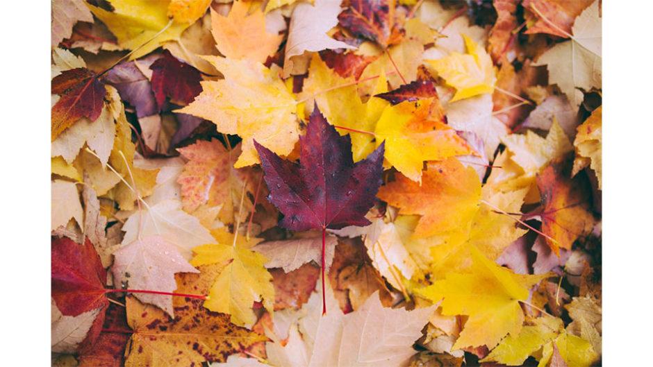 みりんの魅力が盛りだくさん!九重味淋「秋の蔵開き」